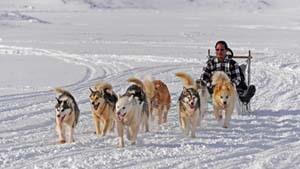 Weltreise Etappe Grönland - Bild 17
