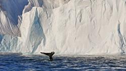 Weltreise Etappe Grönland - Bild 43