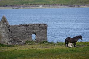 Weltreise Etappe Island und Färöer - Bild 110