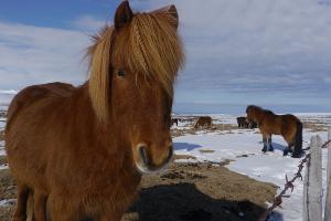 Weltreise Etappe Island und Färöer - Bild 190