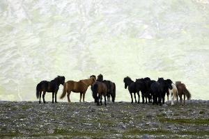 Weltreise Etappe Island und Färöer - Bild 233