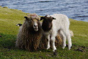 Weltreise Etappe Island und Färöer - Bild 315