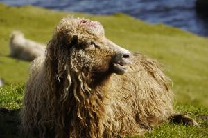 Weltreise Etappe Island und Färöer - Bild 316