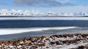Weltreise Etappe Island und Färöer - Bild 323