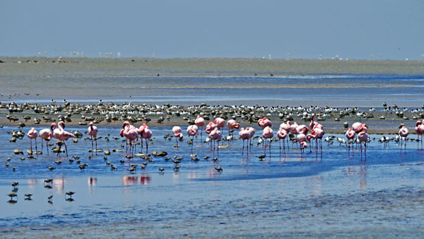 Weltreise Etappe Afrika - Namibia - Flamingos
