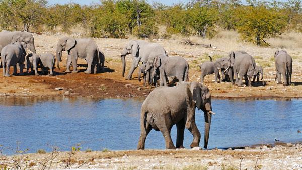 Weltreise Etappe Afrika - Elefanten