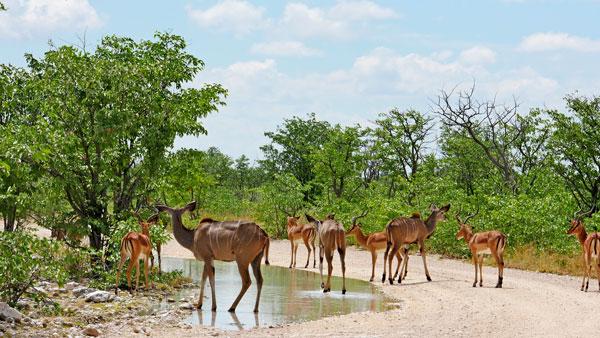 Weltreise Etappe Afrika - Kudu